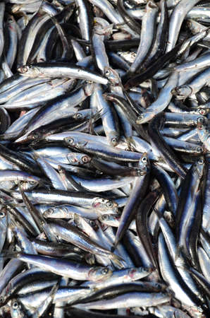 inexhaustible: raw anchovy fish as a background