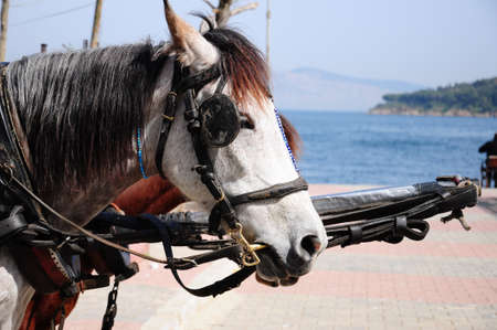 horses of a horse cart photo