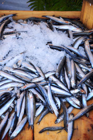 anchovy fish: anchovy fish under ice for sale