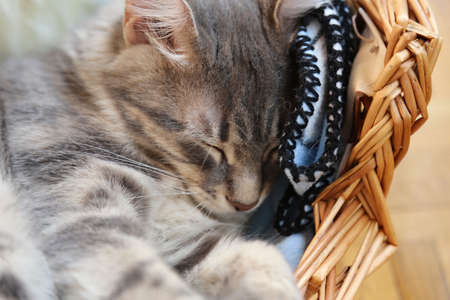 cute cat laying in basket photo