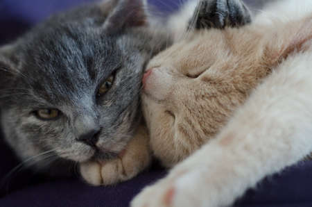 cute cats / kittens sleeping together Stock Photo - 18137303