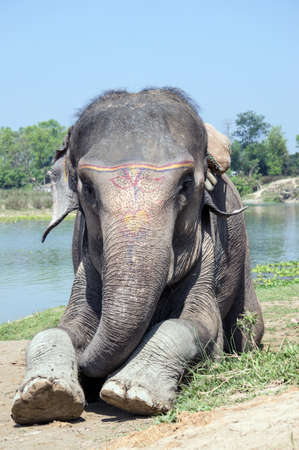elephant next to river   lake photo