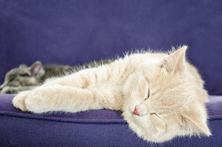 cats sleeping photo