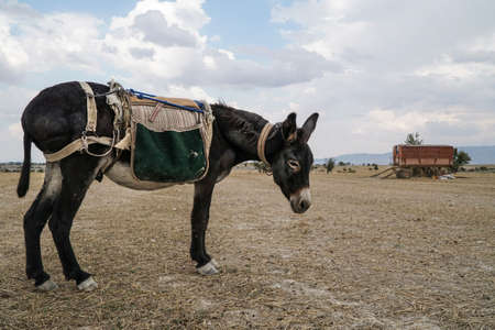 a donkey standing alone in the countryside