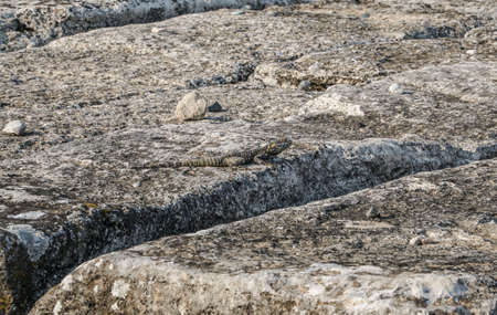 hardly: Reptile hardly seen on stone Stock Photo