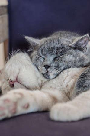 twee schattige katten  kittens die samen slapen Stockfoto