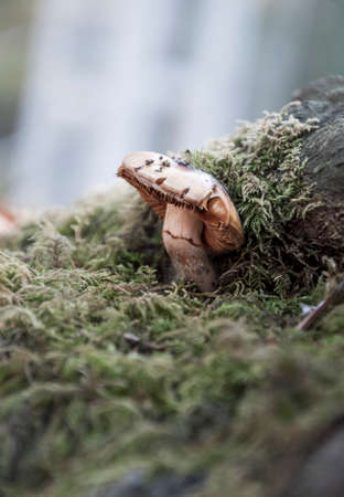 close up of a mushroom in nature with copy space Stock Photo