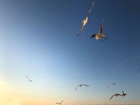 A flock of seagulls flying in the sky with copy space Stock Photo