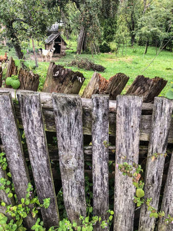 an aged wooden fence of a garden in spring Banque d'images - 122221978
