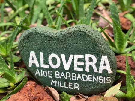 aloe vera plants with sign in a botanical garden in Sri Lanka, Asia