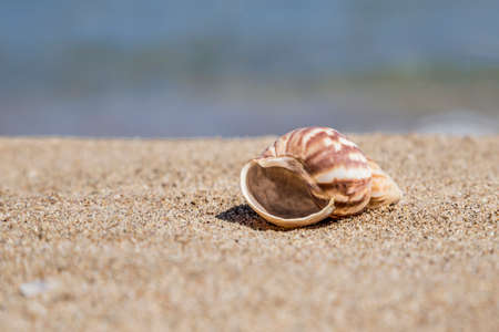 A seashell on a sandy beach in summer with copy space
