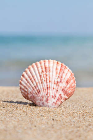 Closeup of a seashell on a sandy beach against sea in summer Imagens