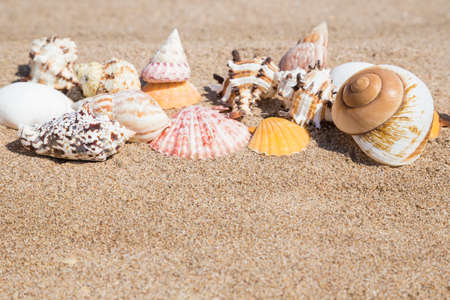 variety of a seashells on a sandy beach in summer