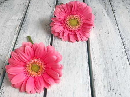 木制背景上的粉色非洲菊