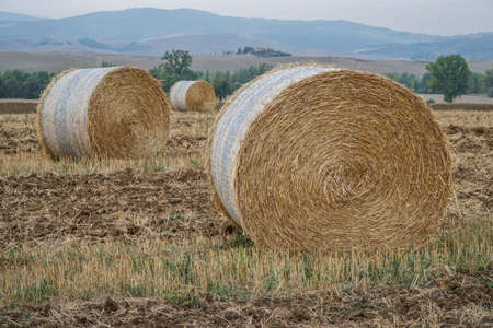 dried straw bales on a field in Italy Stockfoto