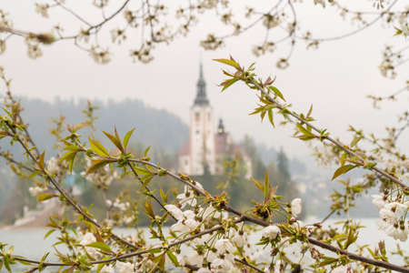 spring flowers on tree against the island of Bled Lake in Slovenia, Europe