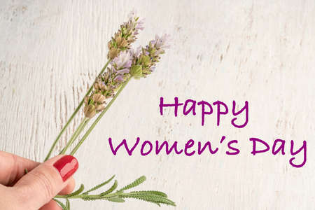 women day greeting with a female hand holding lavender flowers Banco de Imagens