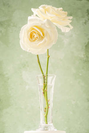 Two white roses in a vase over soft green background with copy space