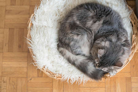 closeup of a cute tabby catalyzing on a basket at home Foto de archivo