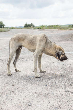 a poor and skinny street dog eating something Stok Fotoğraf