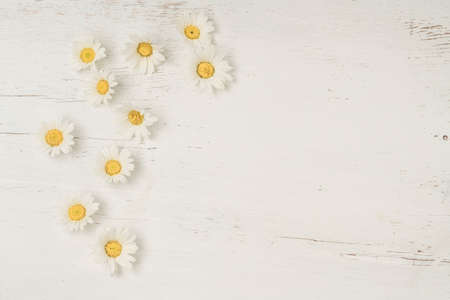 daisy flowers frame on a white wooden table with copy space