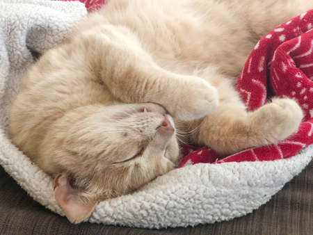 a yellow tabby cat sleeping on the blanket on bed at home