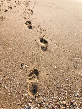 footprints on the sandy beach in summer with copy space