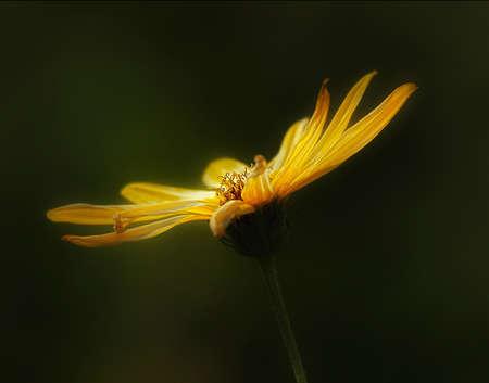 ittle: little flowers-semitsvetik