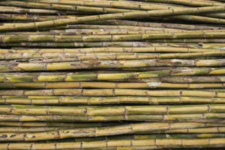 division: Bamboo Division for construction.