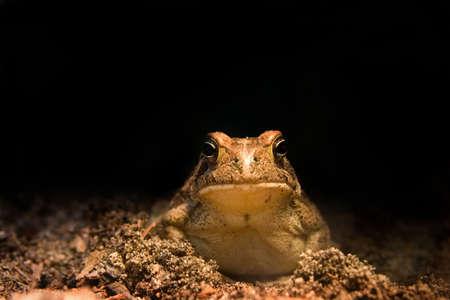 nite: Frog enjoying the nite life Stock Photo