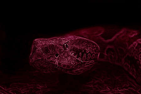 rattle snake with red filter photo