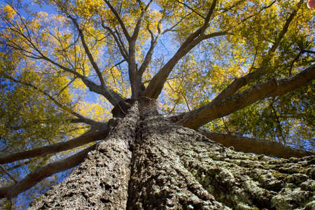 giant tree Stock Photo - 1490558