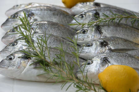 sparus: sea bream