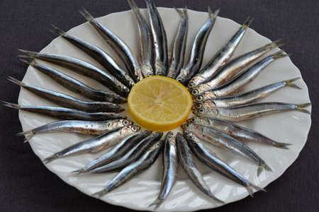 engraulis encrasicolus: European anchovy Stock Photo