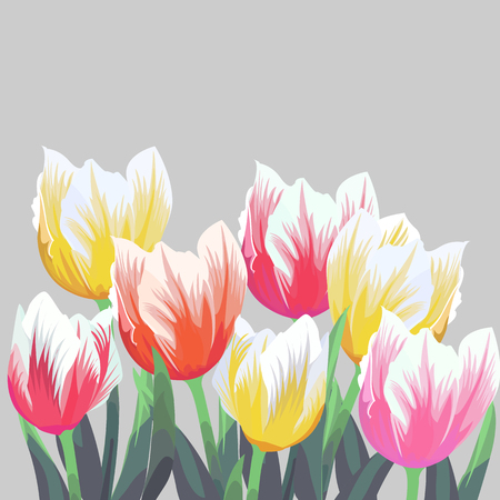 Tulips. Color vector tulips isolated on grey background. Flowers in different shapes for your design and greetings, postcards card for your loved ones