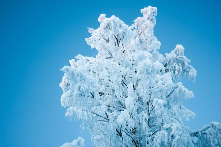 Beautiful winter tree and branches covered snow. Stock fotó
