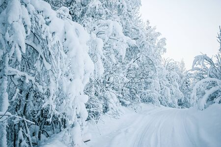 Beautiful fabulous winter landscape: the road going through the forest, everything is covered with snow.