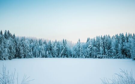 Beautiful winter landscape, frozen lake on a forest background