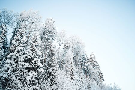 Hermoso paisaje invernal, árboles forestales, pinos y abetos cubiertos de nieve contra el cielo Foto de archivo