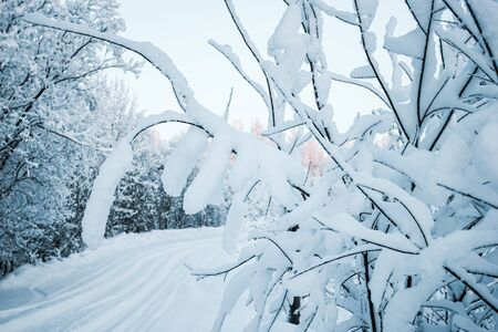 Frozen tree branches and bushes covered in snow on a sunny winter morning. Stock fotó