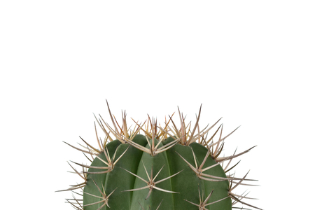 Green cactus on clear white background