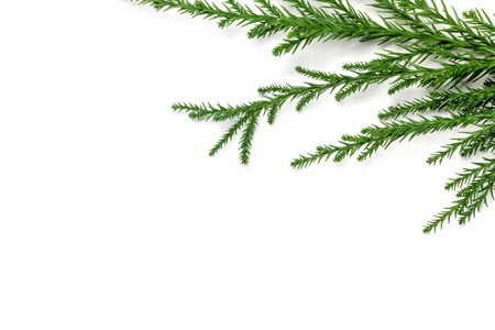 Green pine tree branches frame on white paper background