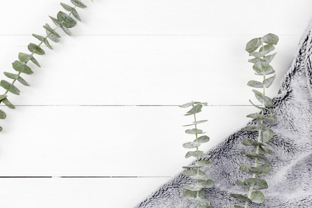 Eucalyptus Silver Dollar plant leaves on white wood panel background with grey fur