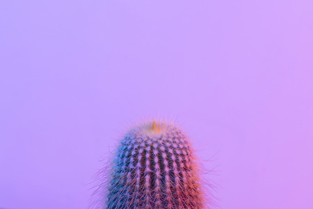 Pastel neon blue and pink light paint on cactus