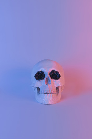 Pastel neon blue and pink light paint on plaster skull decorate with black flower Zdjęcie Seryjne