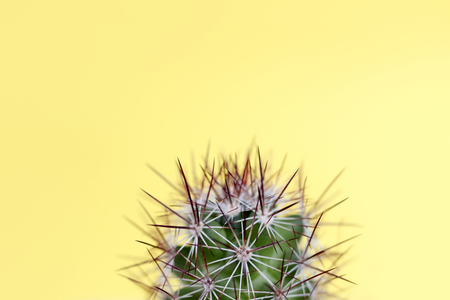 Green yellow cactus with red throws on pastel yellow background