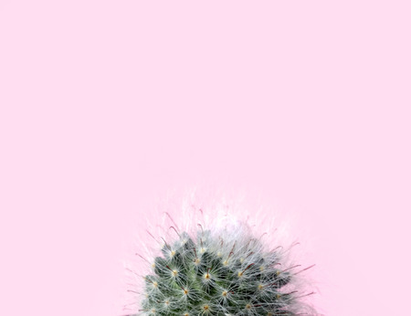 Green gymnocalycuim cactus on pastel pink background