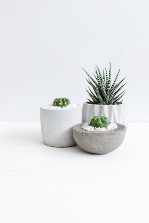 Minimal white theme small cute cactus and zebra prints haworthia in cement pots