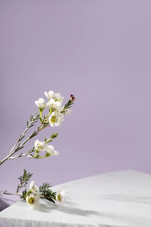 Pastel purple and white stone marble display set for product background decorate with white flower photography