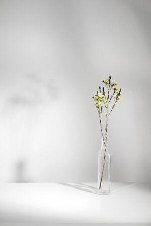 Minimal white flower in glass bottle with white room wall and light from window photography Фото со стока